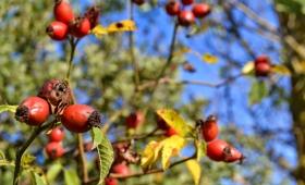Propuesta: lugares que visitar en otoño. De la mano de Dacia