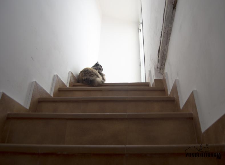 escalera7